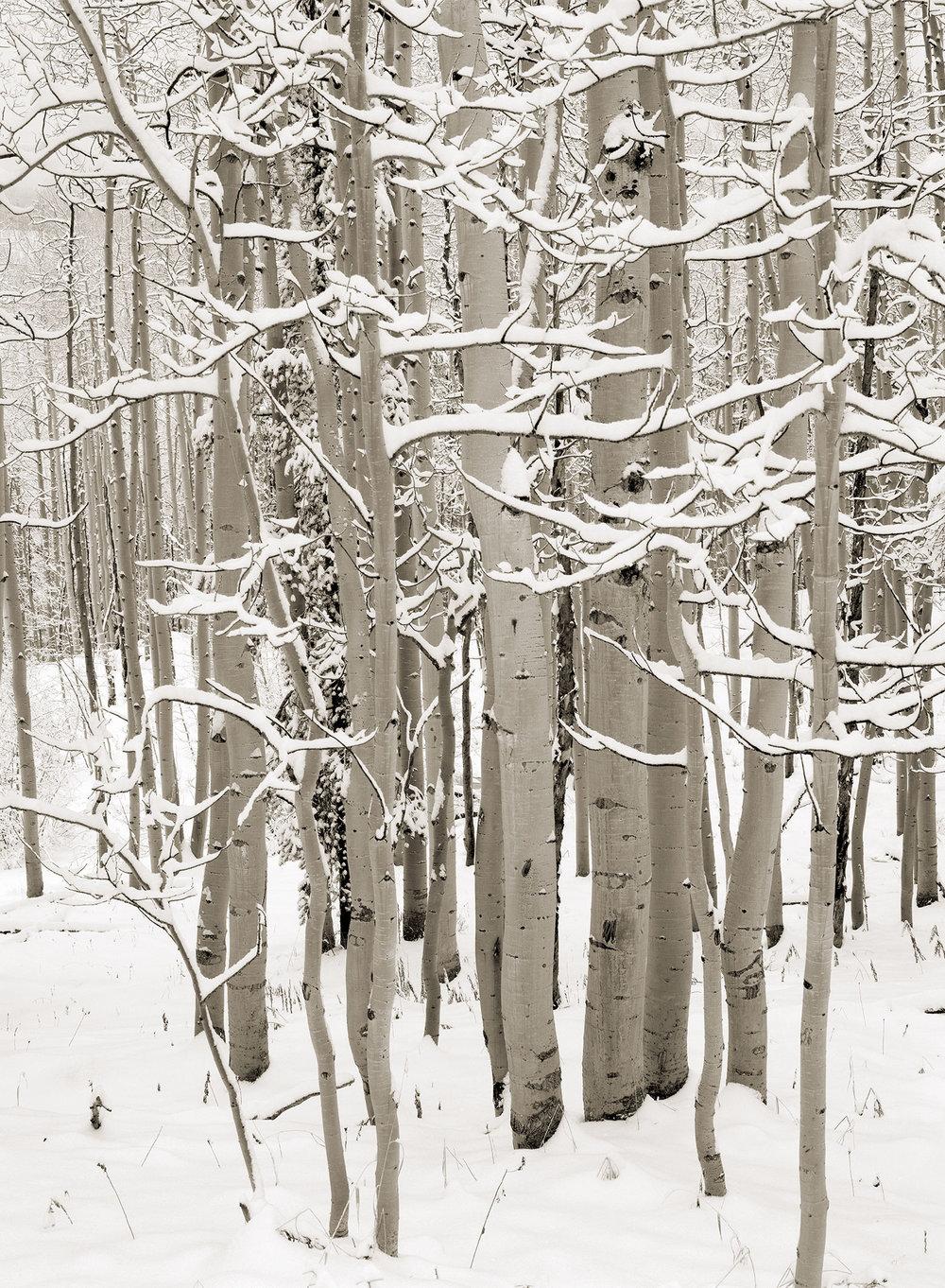 snowyaspens.jpg