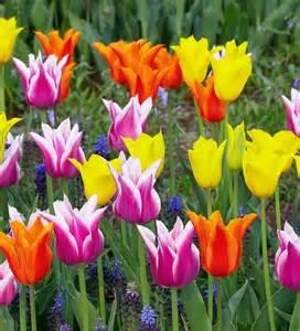 tulips for teams.jpeg