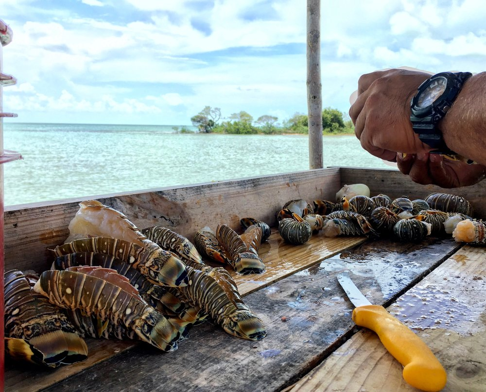 A local fisherman prepares the afternoon's spiny lobster catch at the Mahogany Bay Beach Club on the leeward side of Ambergris Caye.