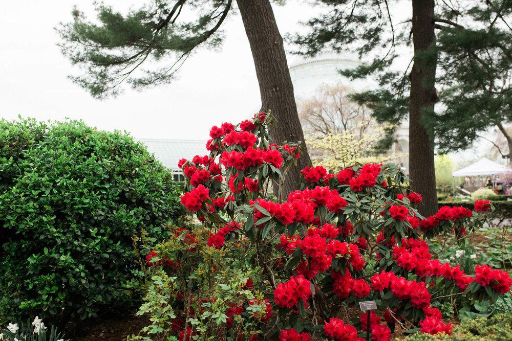 ny-botanical-gardens-same-sex-engagement-28.jpg