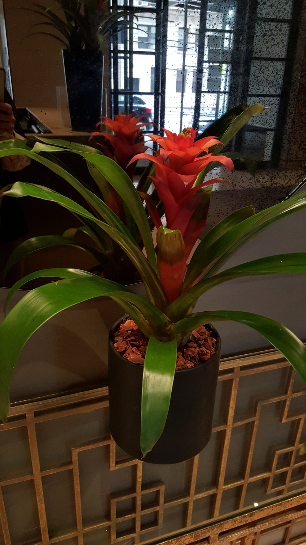 Bromeliad 5