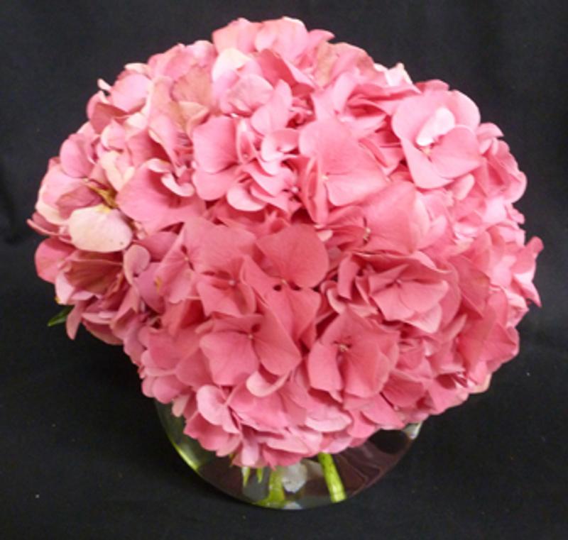 Hydrangea - Pink