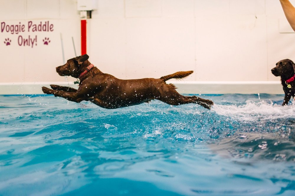 Suffolk's finest doggies can now learn to swim thanks to the Funding Circle. What a dream.
