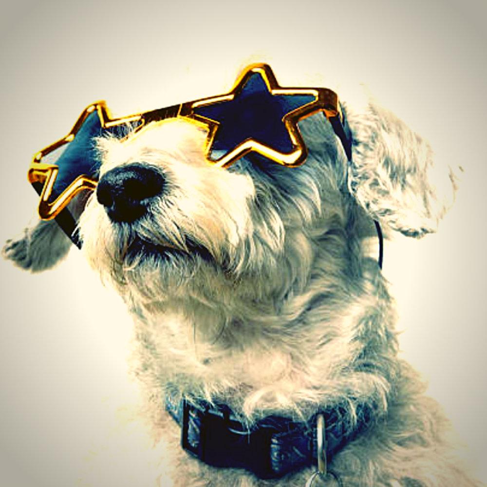 Kilby Blades VIP Program Dog.jpg