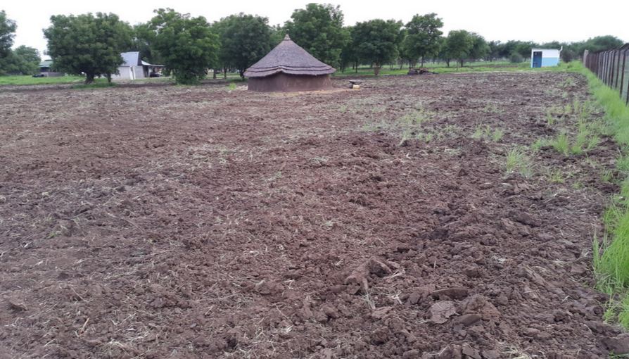 Newly ploughed land around the MCH compound.