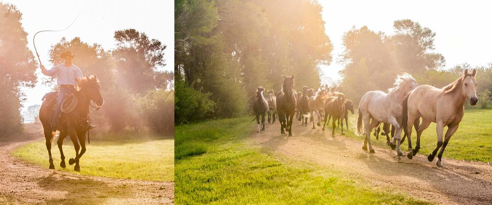 Vee Bar Dude Ranch Horses Morning Stampede Cowboy.jpg