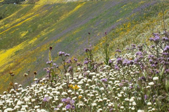 Carrizo Plain National Monument, California