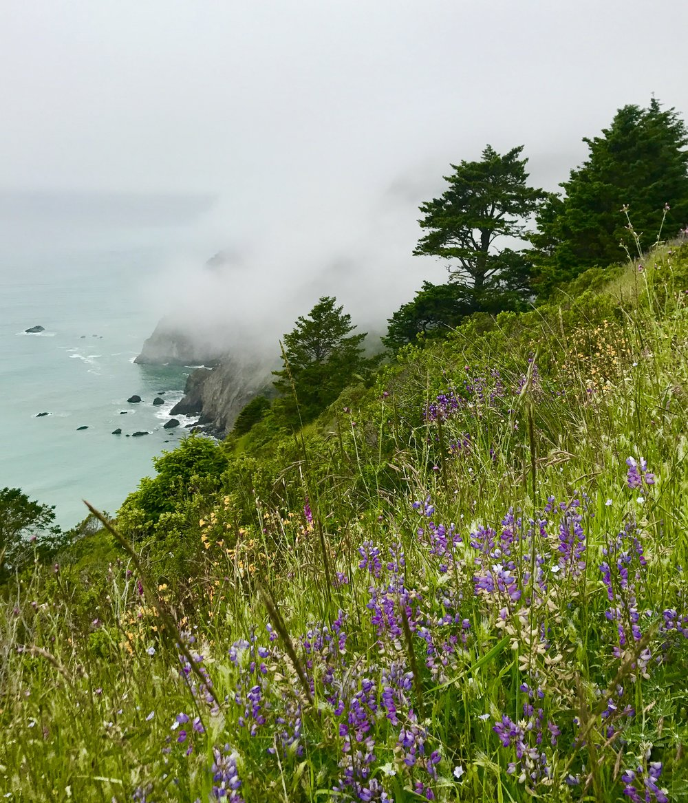 Lost Coast Trail, California