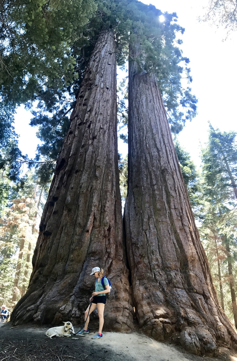 B and her dog, Trail of 100 Giants, Sequoia National Forest, California