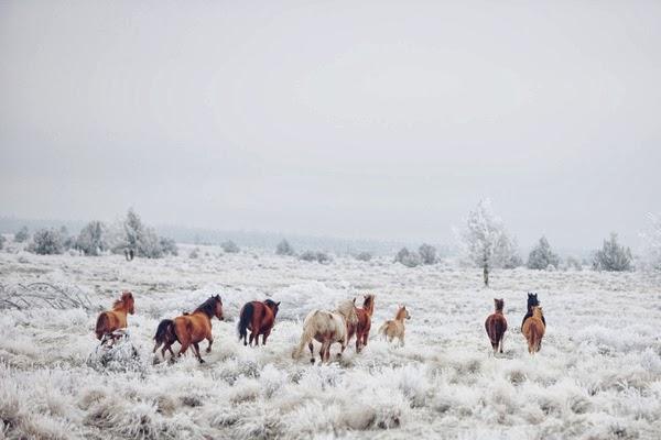 winter-horses.jpg