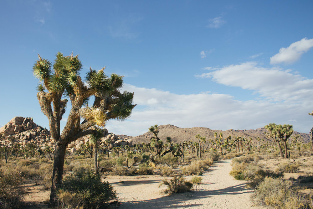 Joshua-Tree-6-copy.jpg