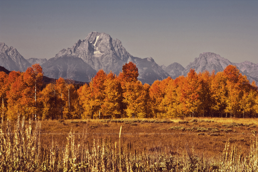 yellowstoneandtetons005