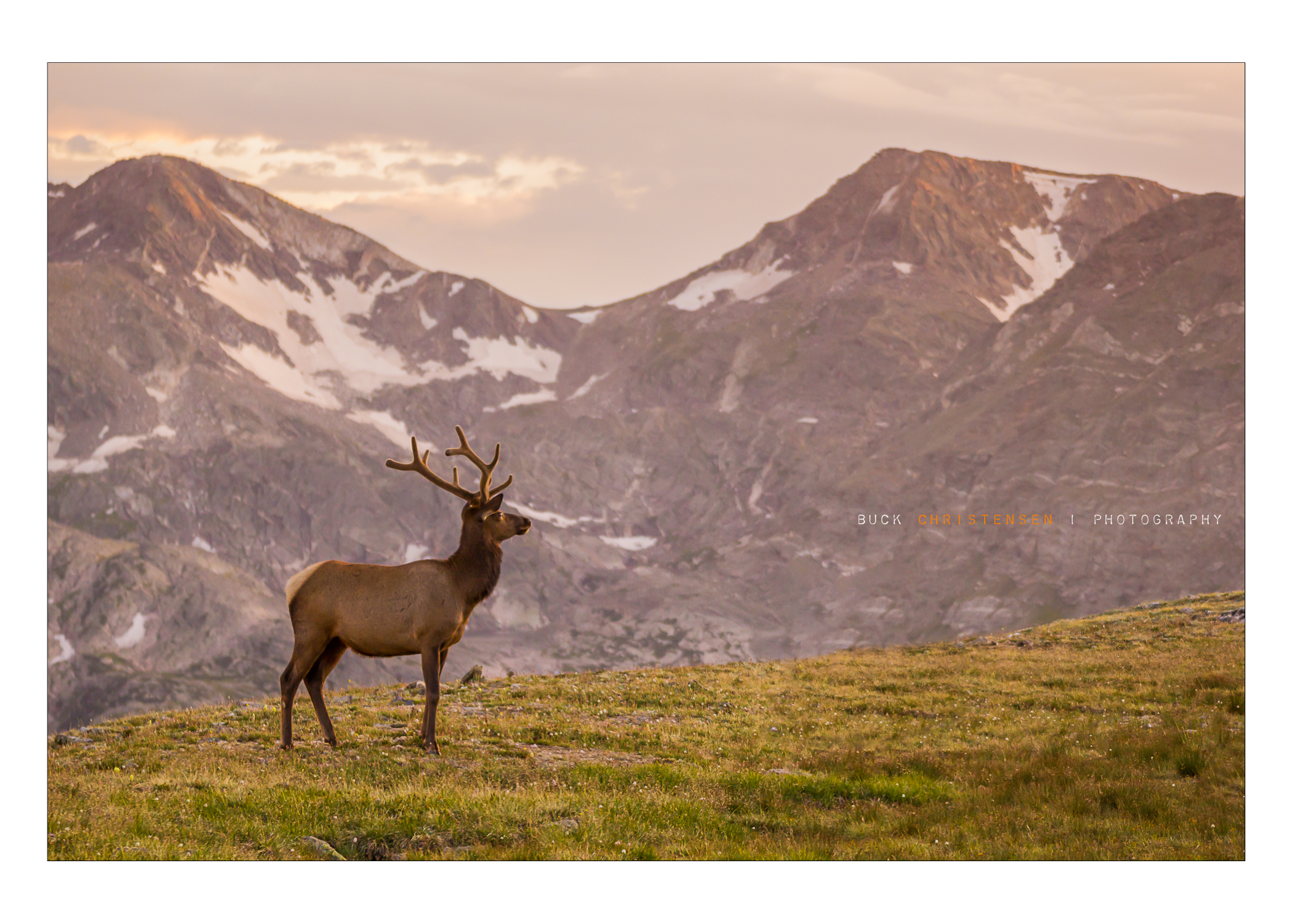 Elk, Sunset, Alpine Summit, Rocky Mountain National Park, Colorado
