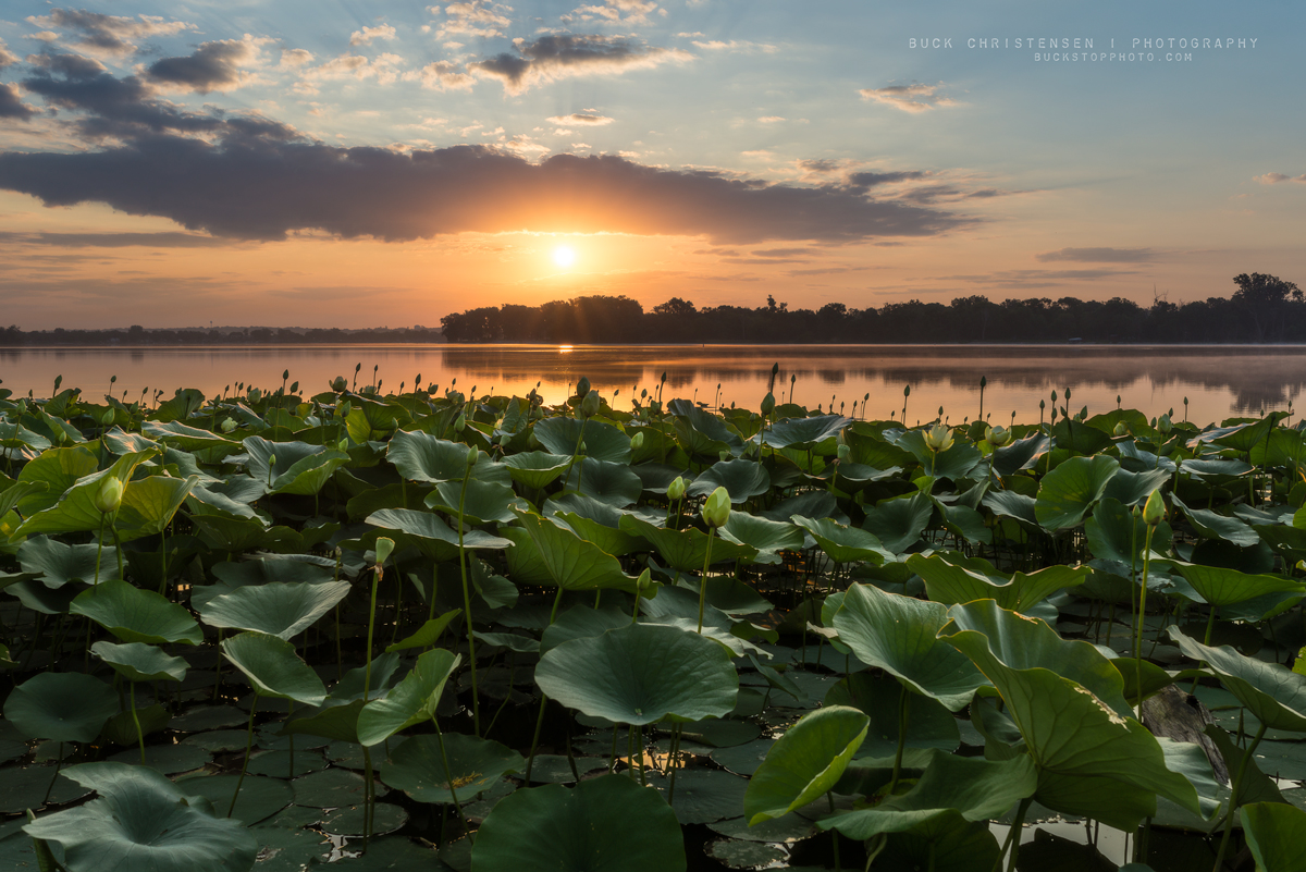 'breakfast with lilies', Lake Manawa State Park, Council Bluffs, Iowa
