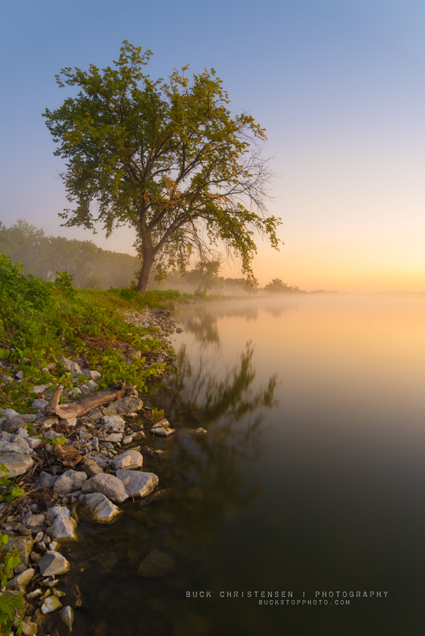 Tree at sunrise at Lake Manawa State Park, Council Bluffs, Iowa.