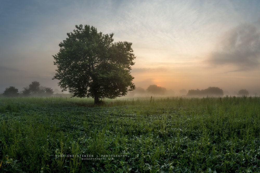 Tree during a foggy sunrise in Council Bluffs, Iowa.