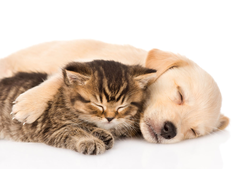 Sleeping cat and dog.jpg