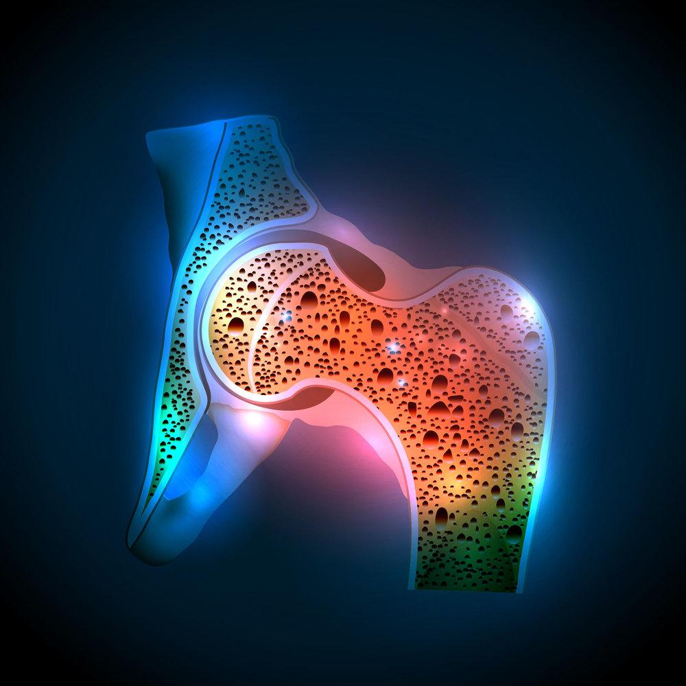 Hip bone.jpg