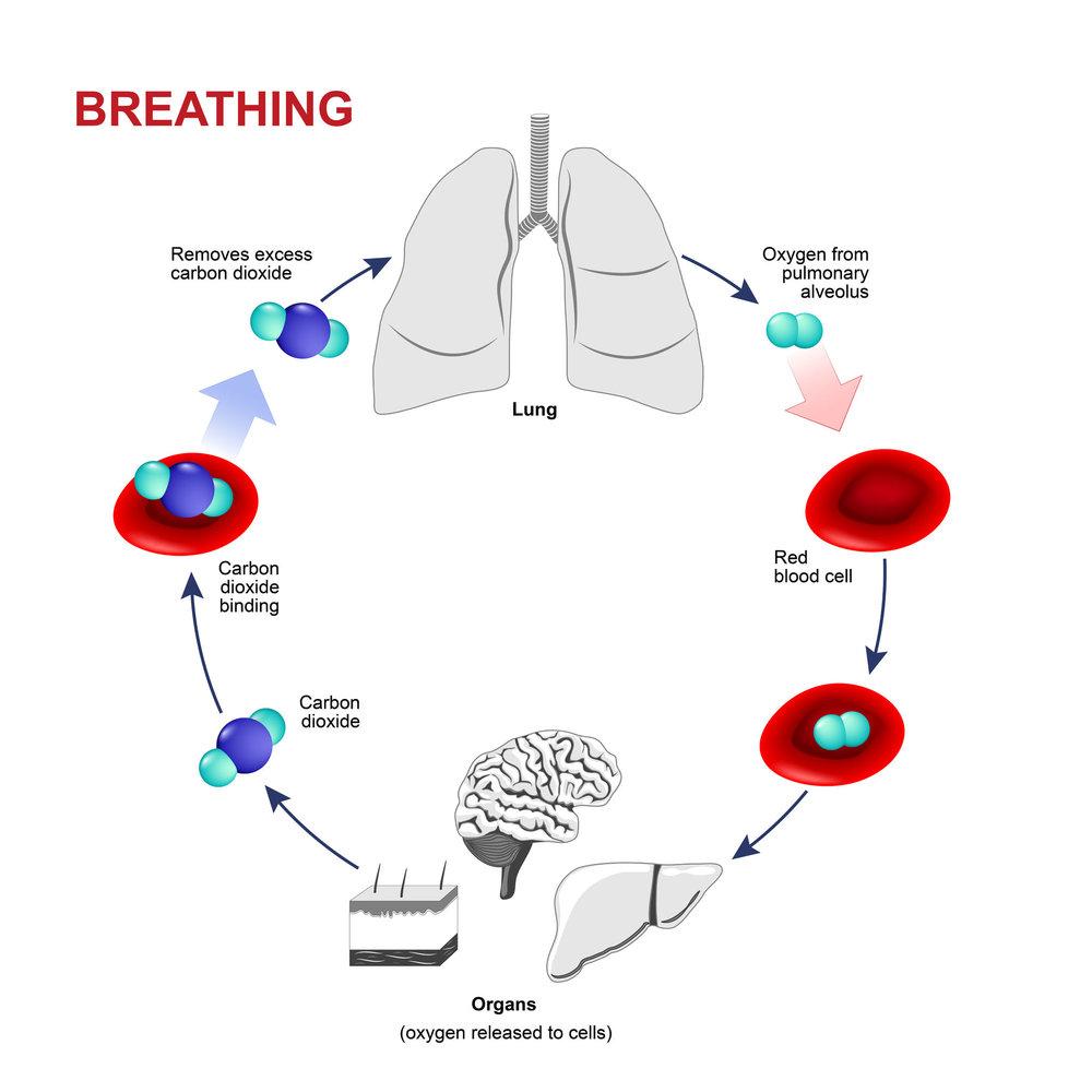 Breathing diagram.jpg