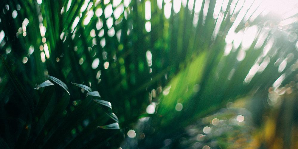 be-green.jpg