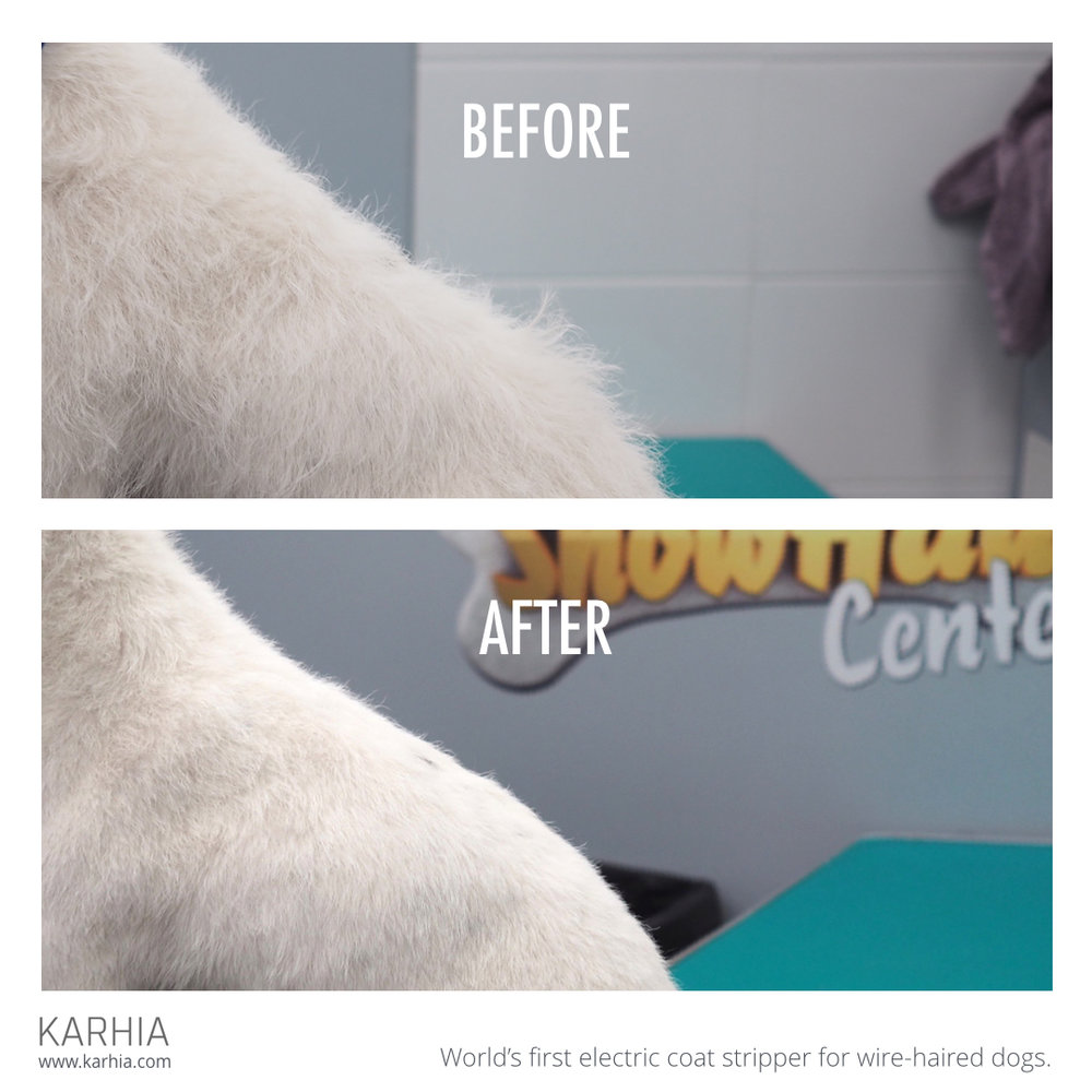 Karhia Before-After Square JackRussel Barry.001.jpeg