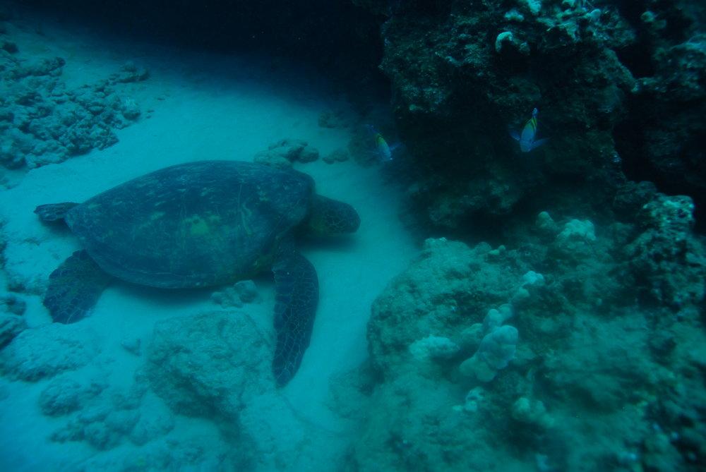 turtleandbodyguards.JPG