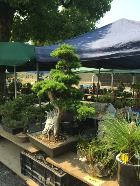 Bonsai dealer at Flea Market