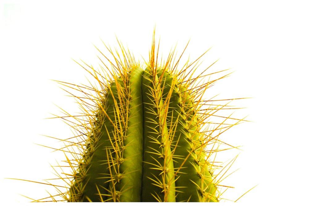 cactus 005.jpg