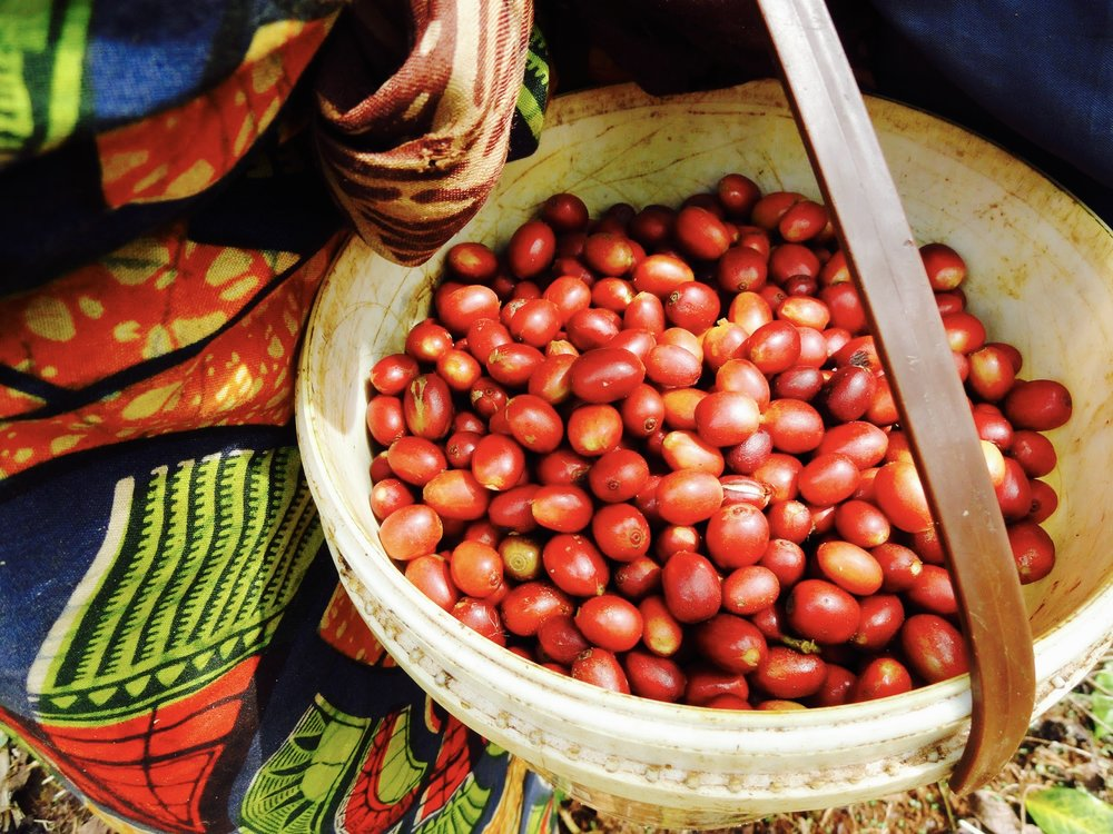 Cameroon beans