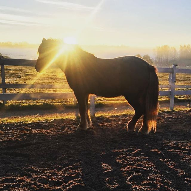 This is the way to start the perfect Sunday morning, truly beautiful 😍 @natureandpet Tags #DVG #DolceVitaGlobal #CreatingHappiness #NaP #NatureaAndPet #animals #horses #morningsun #stunning #moments #wanderlust #helsinki