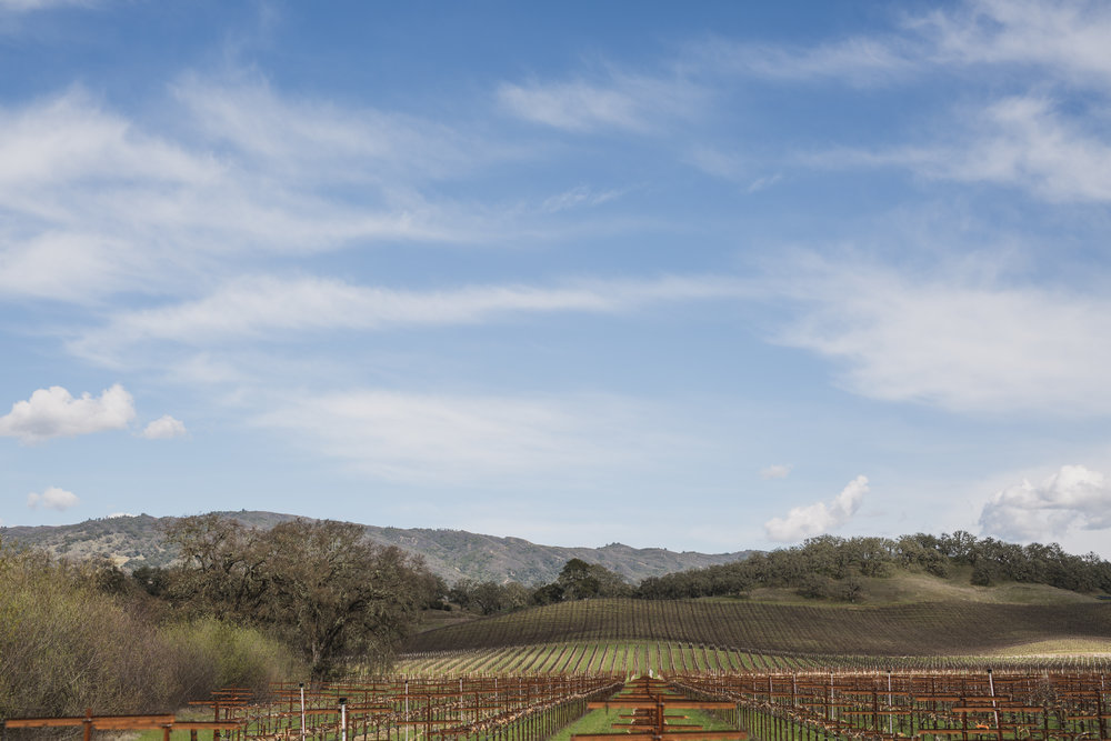 NOURISHED - Recommended by Cat Sarsfield @catsarsfieldCampovida - Hopland, CA. This is the vineyard I am working at, one which is steeped in its own history, but also where I found my feet as an adult. It's a property with an energy which is wholly nourishing and loving - mainly down to its owners, Anna and Gary, whose love and energy is boundless. You can walk through the gardens and meet Ken, who is a legend in his own right, a peaceful warrior full of life and tales to tell of his California upbringing in the 60s and 70s. Or you can spend an afternoon in the tasting room drinking Campovida's amazing wine, or you can stay the night and soak it all in after hours. I can't think of a more vital and welcoming place in wine country.