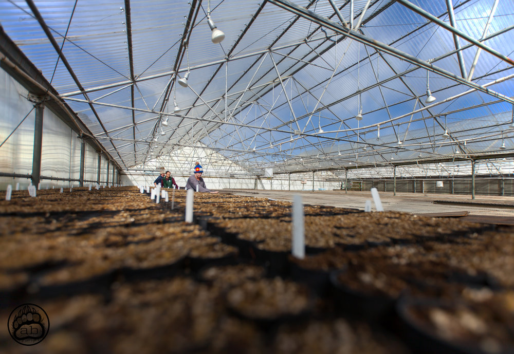 USA. Fort Collins, Colorado. February 6, 2018. The Colorado State Forest Service greenhouses cover nearly 18,000 square feet and host Climate Change resistant tree species to be planted across the state in post fire burn areas.