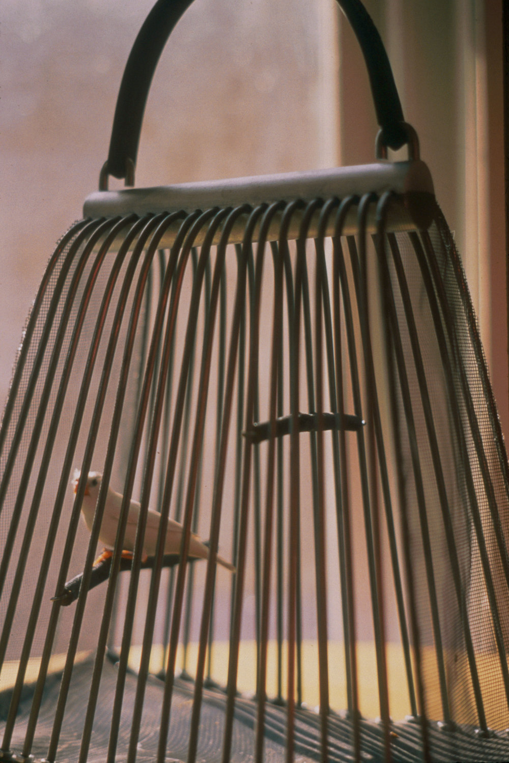 Freedom (purse)   Steel, aluminum, rubber, sticks, and finch  1993