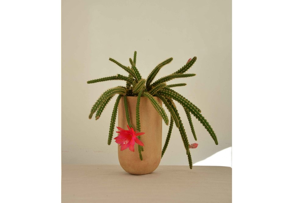 sandvases-kaktus.jpg