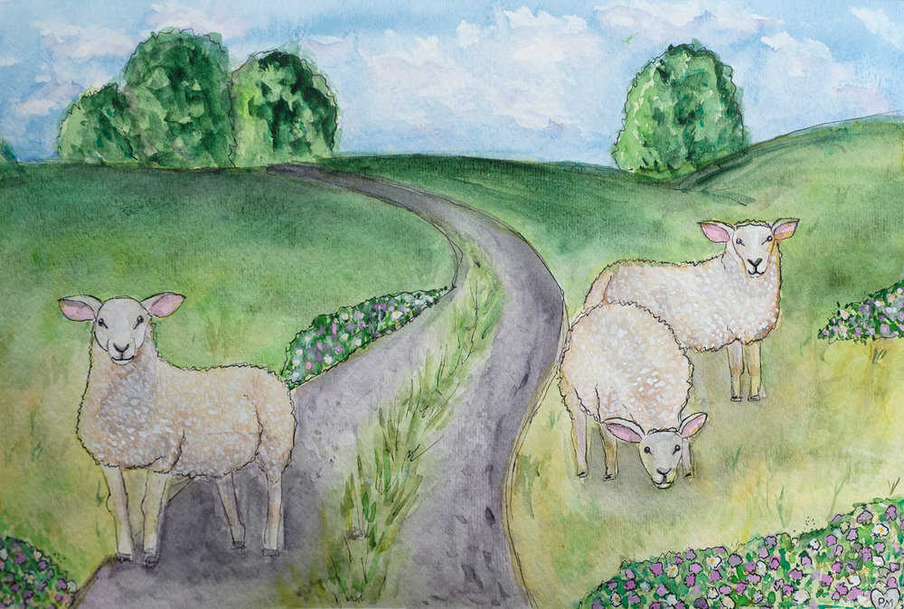 Sheep of the Cotswolds