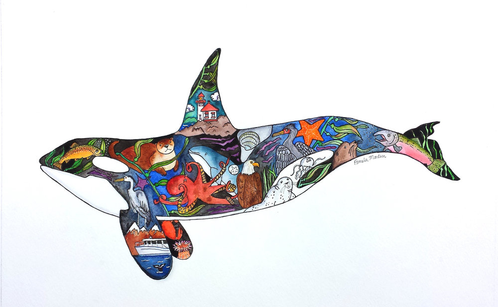 Decatur Island Orca in Watercolors