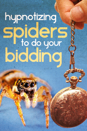 HYPNOTIZING SPIDERS TO DO YOUR BIDDING