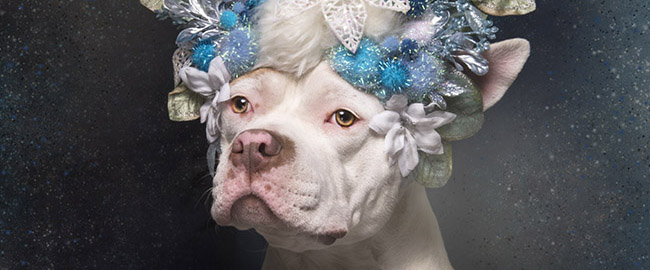 the-invisible-dog-pitbull-flower-power-sophie-gamand