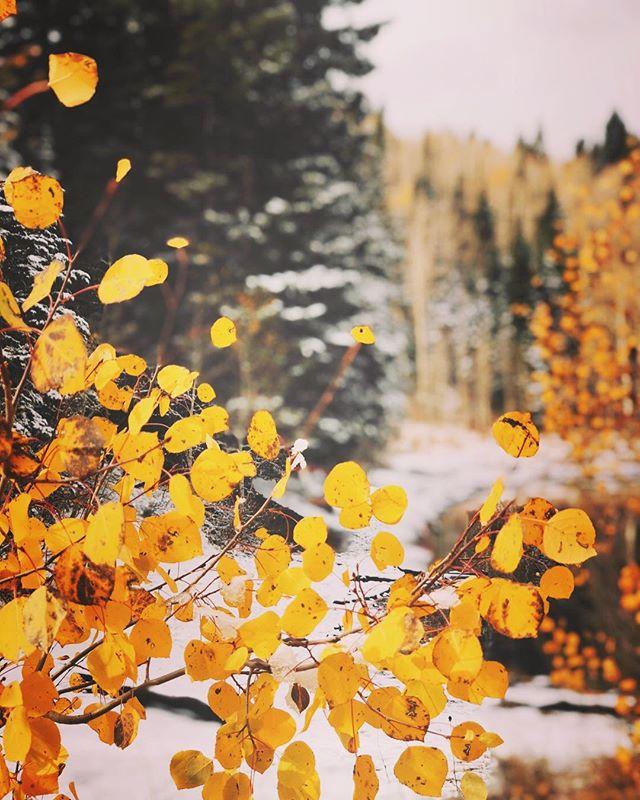 Joyful little leaves :)