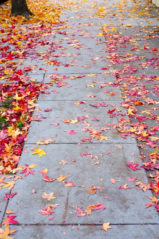 Ginevra leaves.jpg