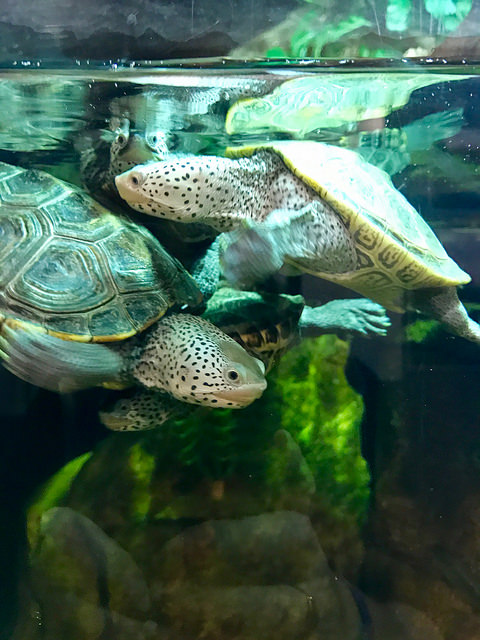 Turtles at Texas Freshwater Fisheries Center. Athens, TX