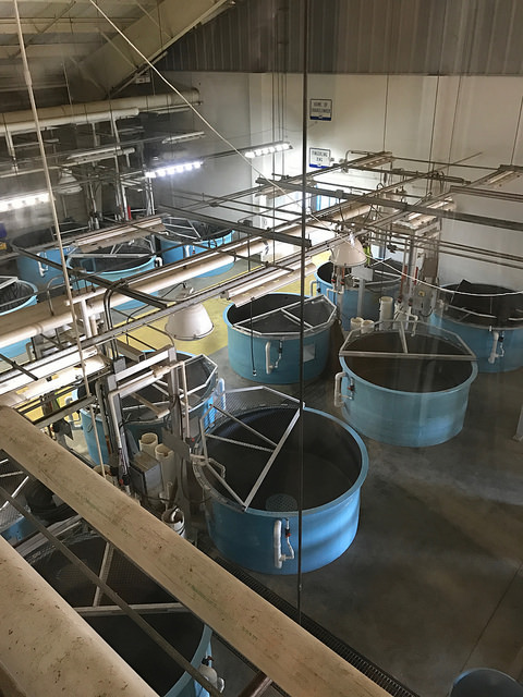 Hatchery  tanks at Texas Freshwater Fisheries Center. Athens, TX