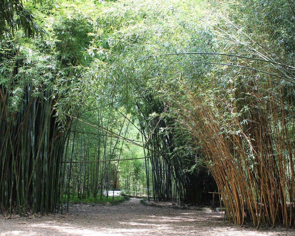web Kapanaha Trail.jpg