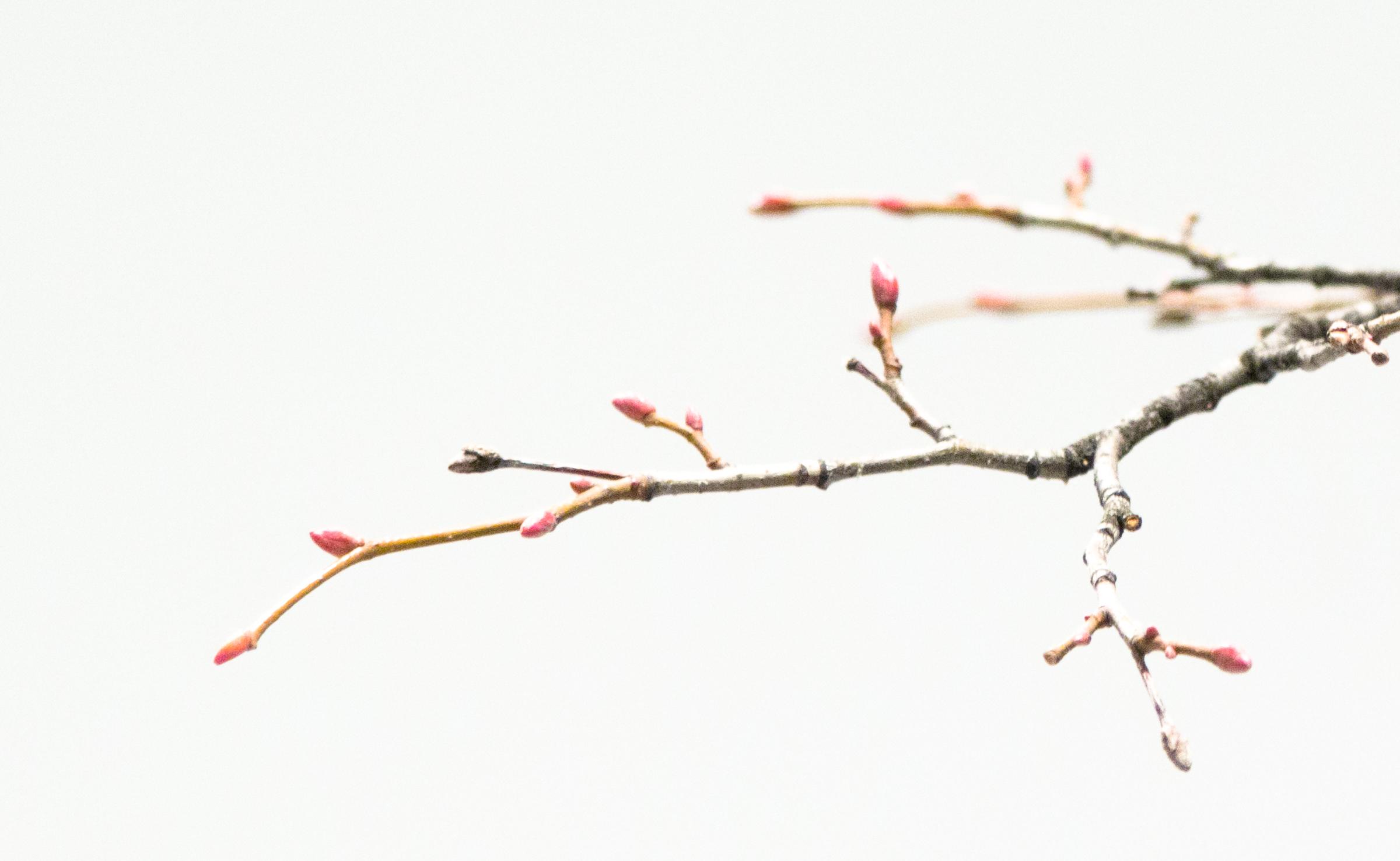 tree_detail.jpg