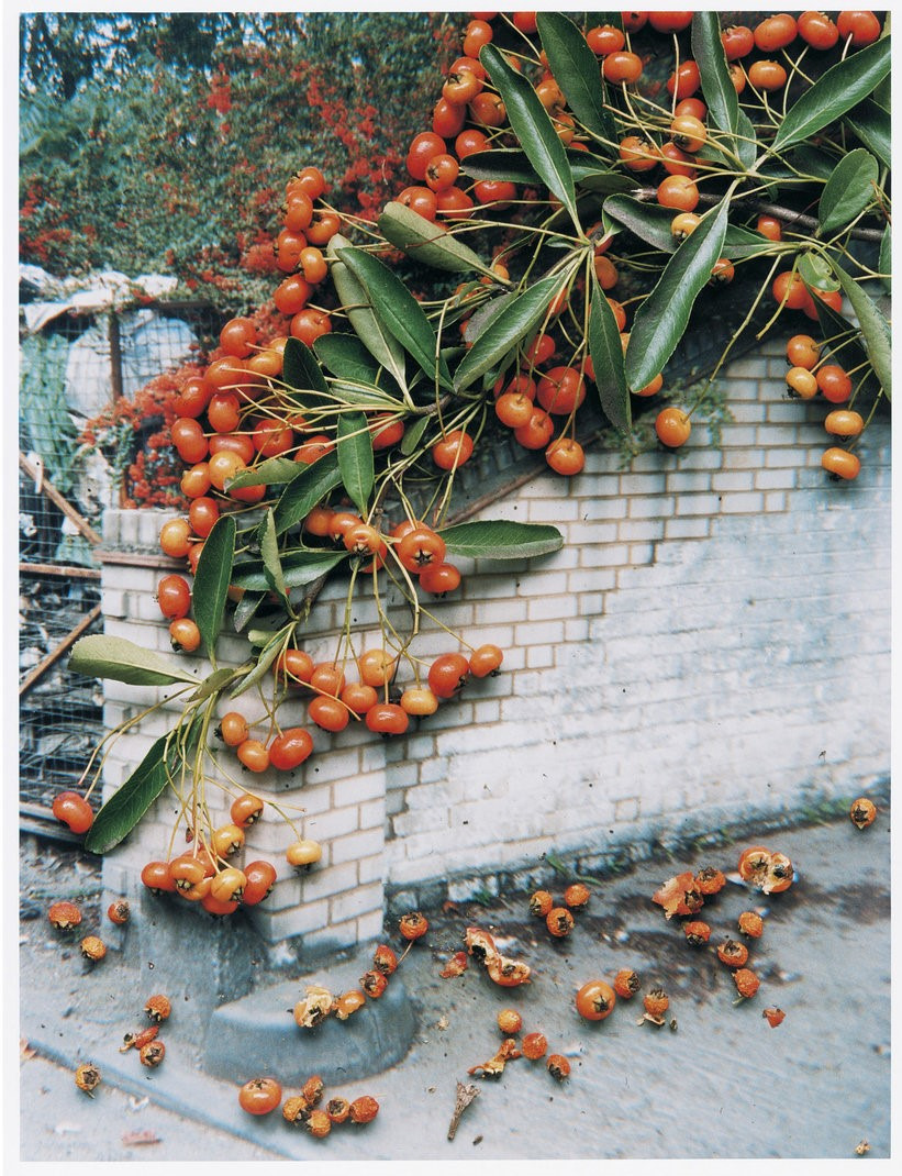 Untitled, from the series 'Hackney Flowers' , 2007