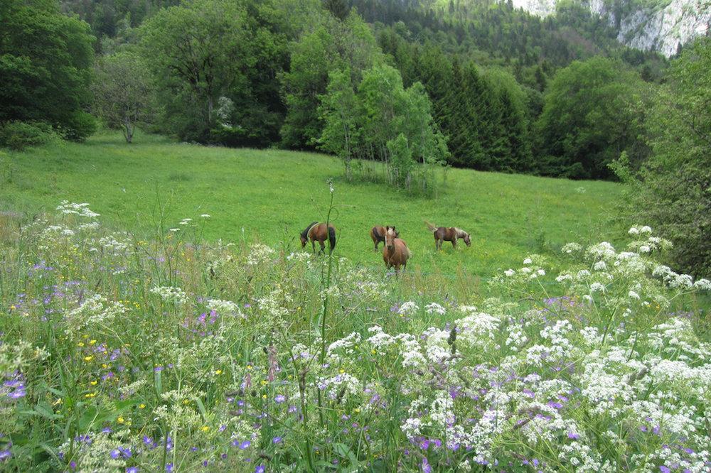 meadowflowersbehindchalet.jpg
