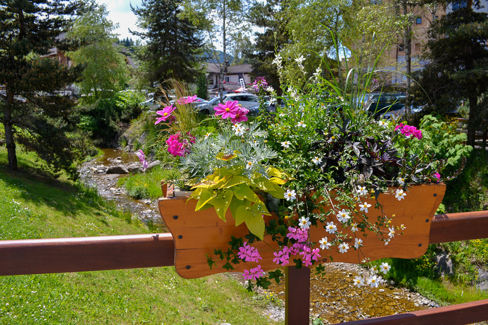 summerflowerslesgets.jpg