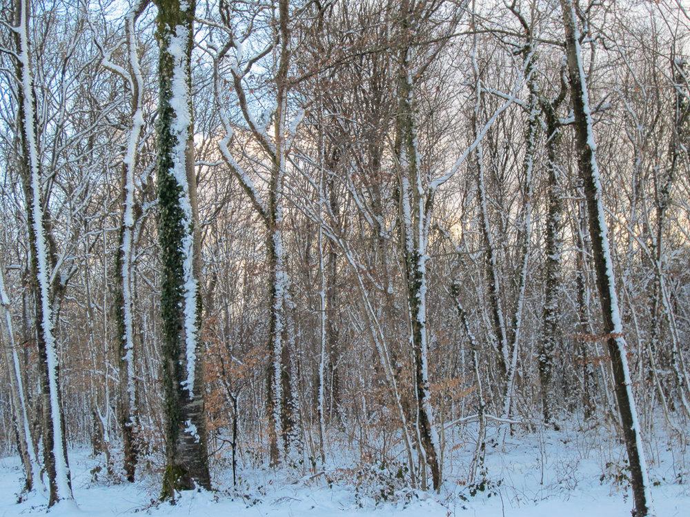 winterwoodland.jpg