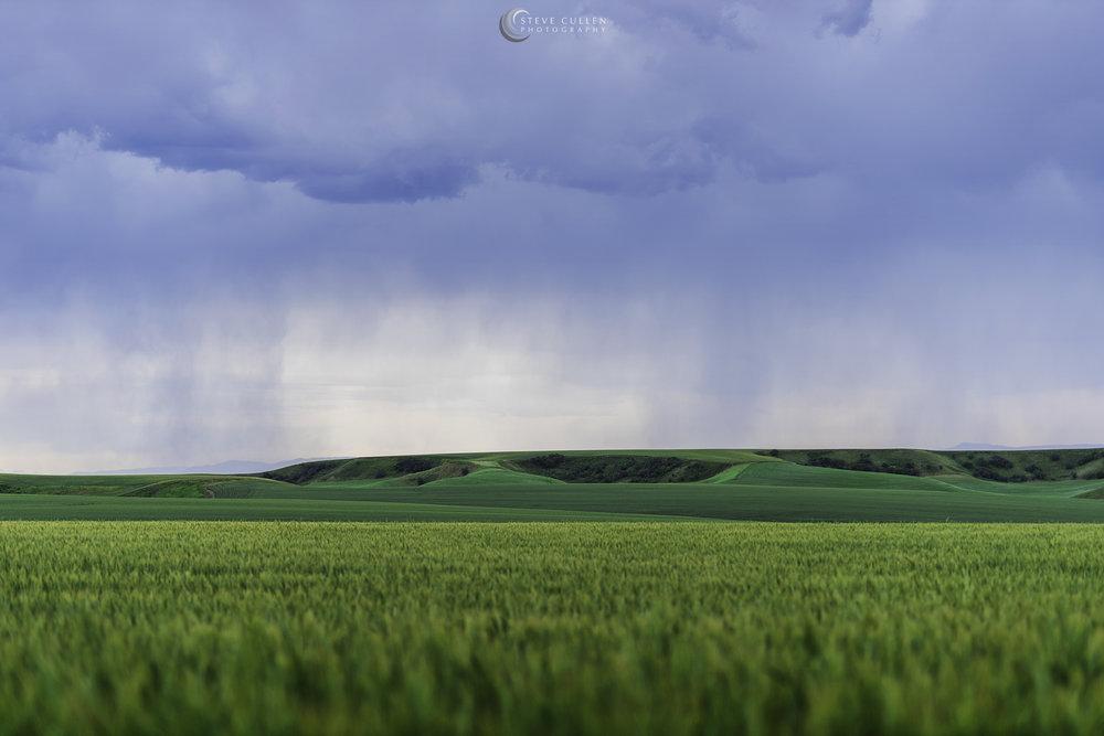 Fields of Green Final 062717.jpg