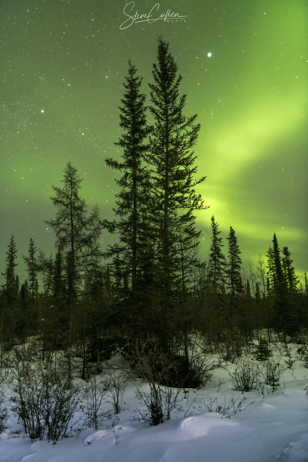 Boreal Forest